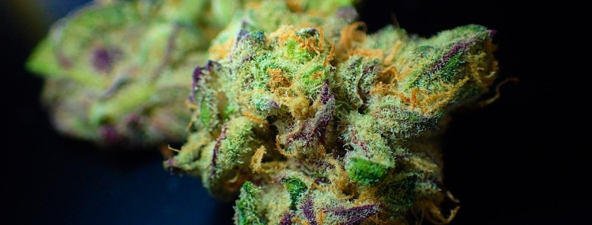 up close of a cannabis flower ile what migh be sold at Med Leaf in Hartford Michigan