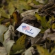 an I voted sticker in a pile of leave to show getting a municipality to opt-in to adult-use marijuana