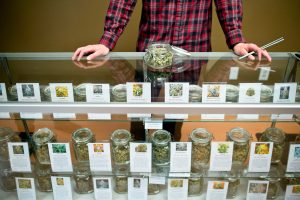 a cannabis business attorney can help set up a legal medical cannabis business